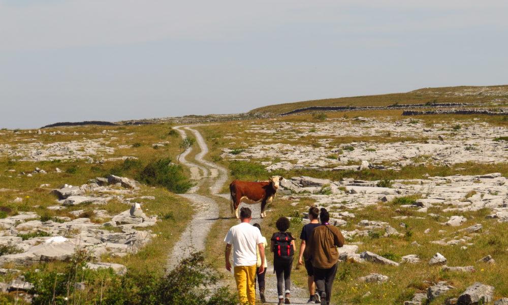 Sustainability Study in Ireland